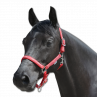 Little horse grime - Waldhausen